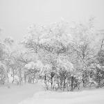 Schubert: Winterreise på norsk</br>Torsdag 29 okt. kl. 18:00