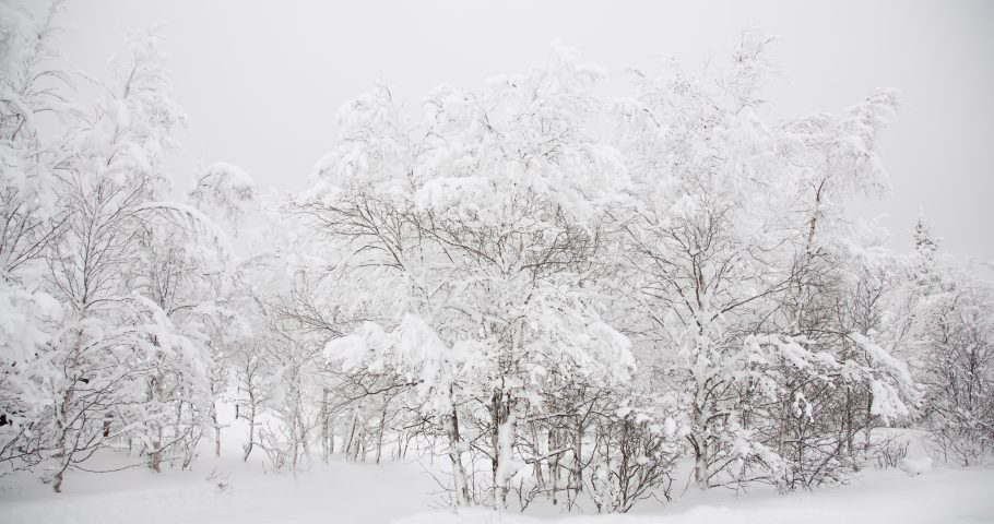 Oslo Operafestival – Vinterreisen